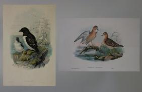 Two J Gould & H C Richter Lithographs, 19thc.