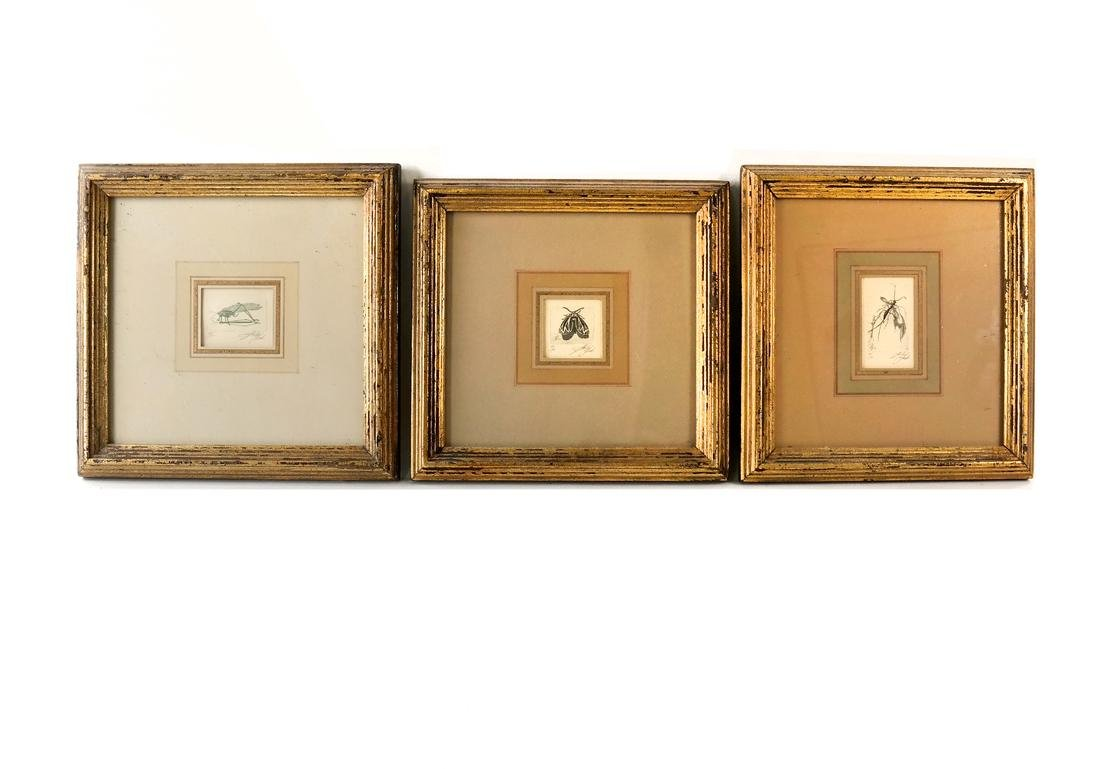 Sheldon Fink - Three Etchings of Insects