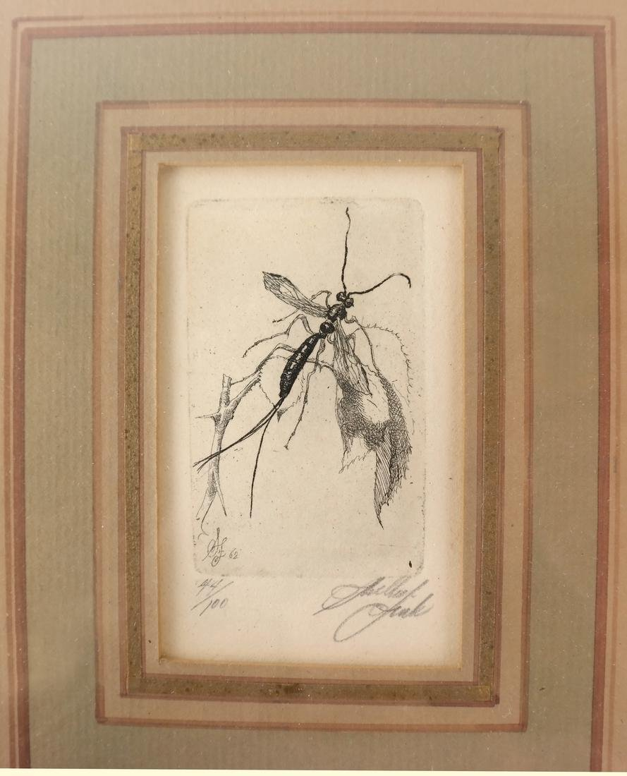 Sheldon Fink - Three Etchings of Insects - 4