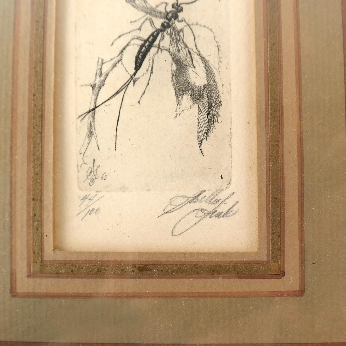 Sheldon Fink - Three Etchings of Insects - 5