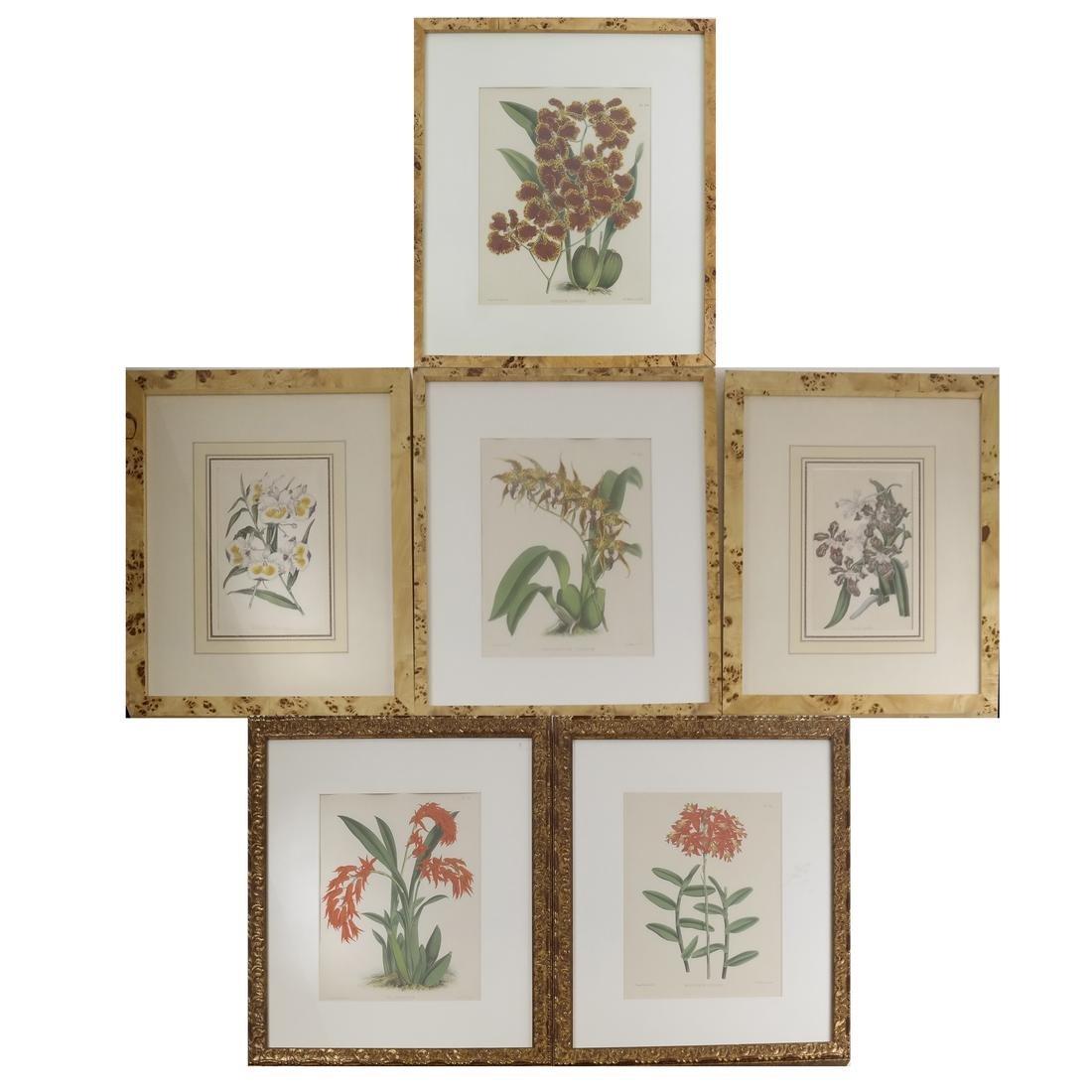 Six Hand-Colored Botanical Prints