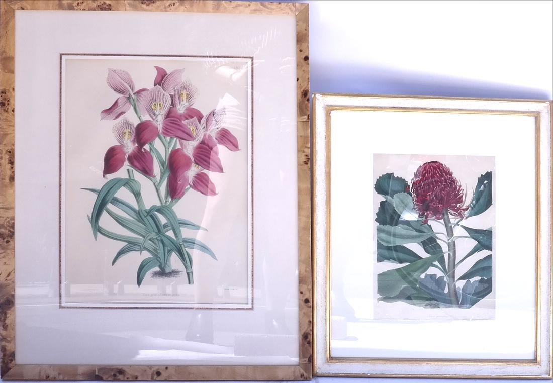 Two Horticultural Prints