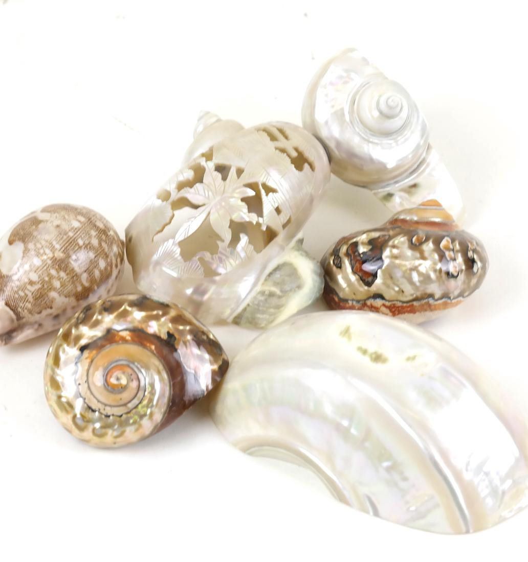 Four Decorative Shells and Other