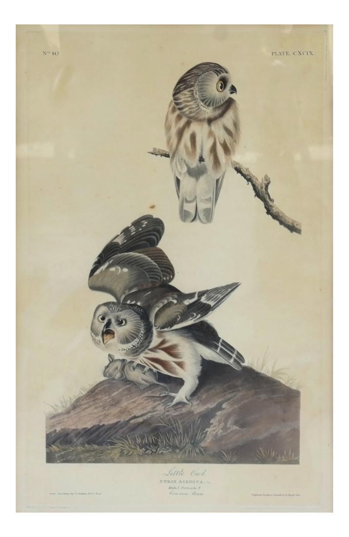 "After John J. Audubon, ""Little Owl"" - Engraving"
