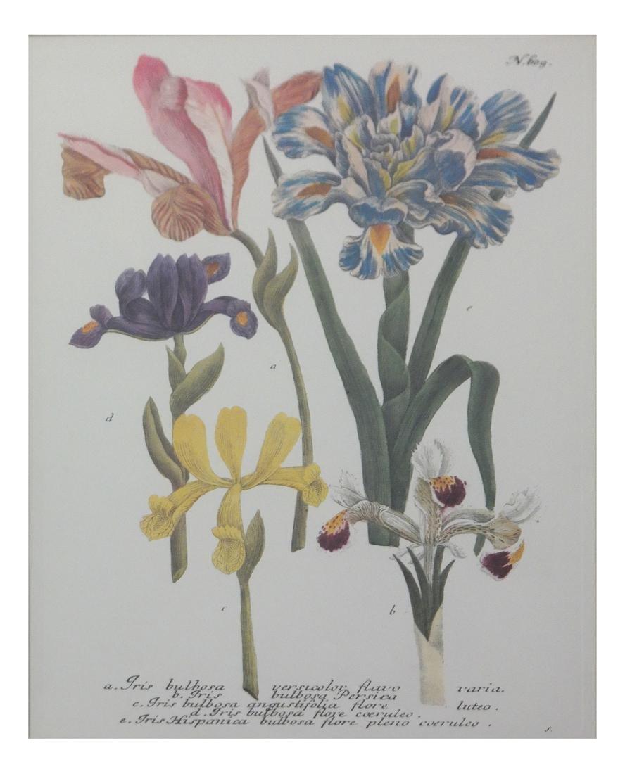 Pierre Joseph Redoute, Engravings - 10