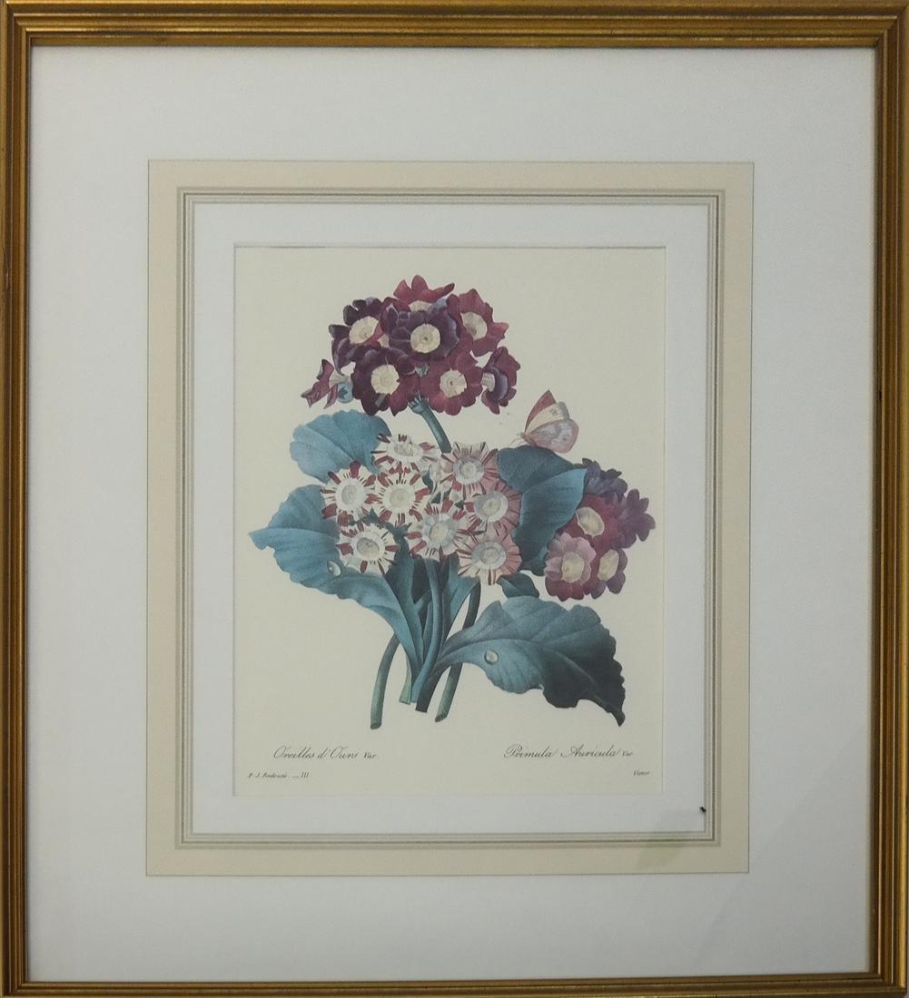 Pierre Joseph Redoute, Engravings - 2