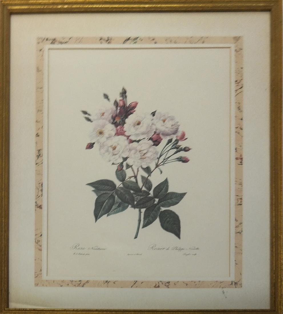Pierre Joseph Redoute, Engravings - 5