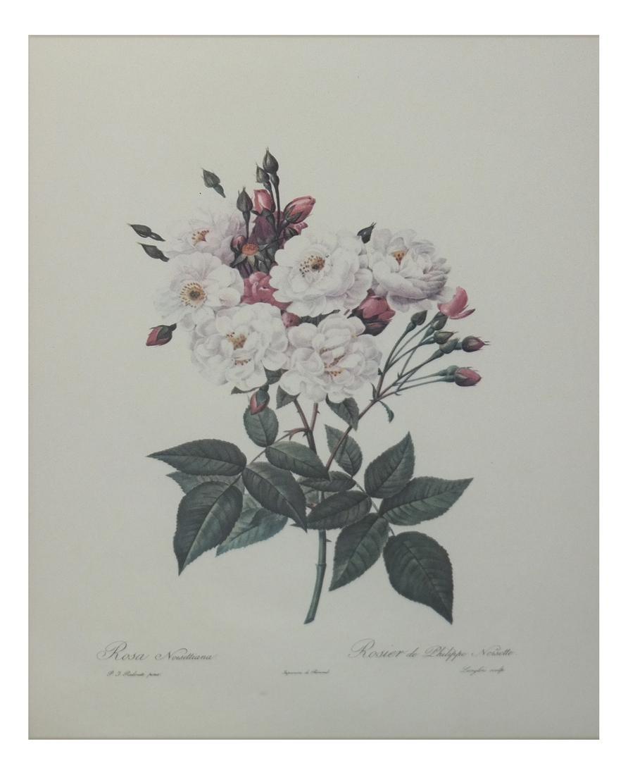 Pierre Joseph Redoute, Engravings - 6