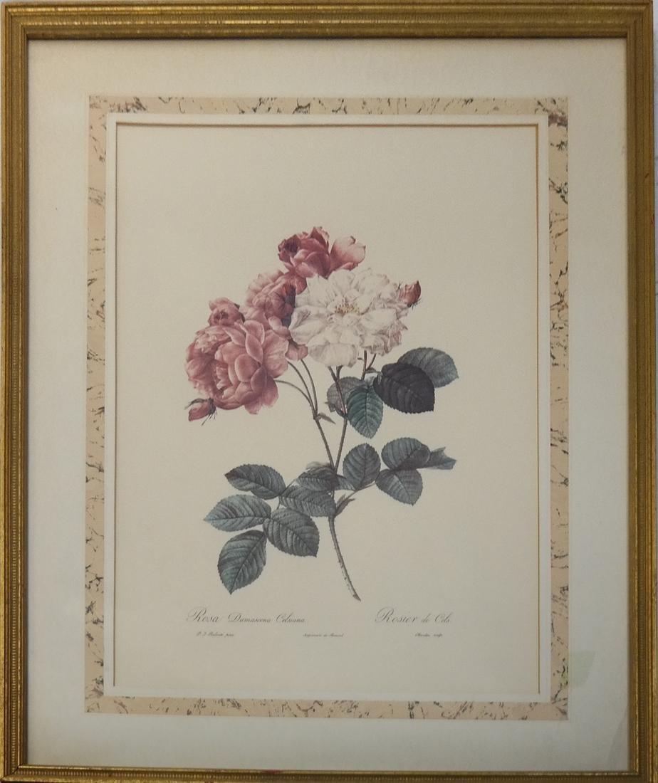 Pierre Joseph Redoute, Engravings - 7