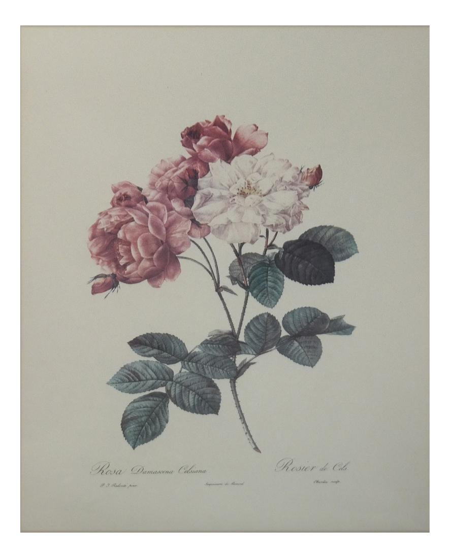 Pierre Joseph Redoute, Engravings - 8
