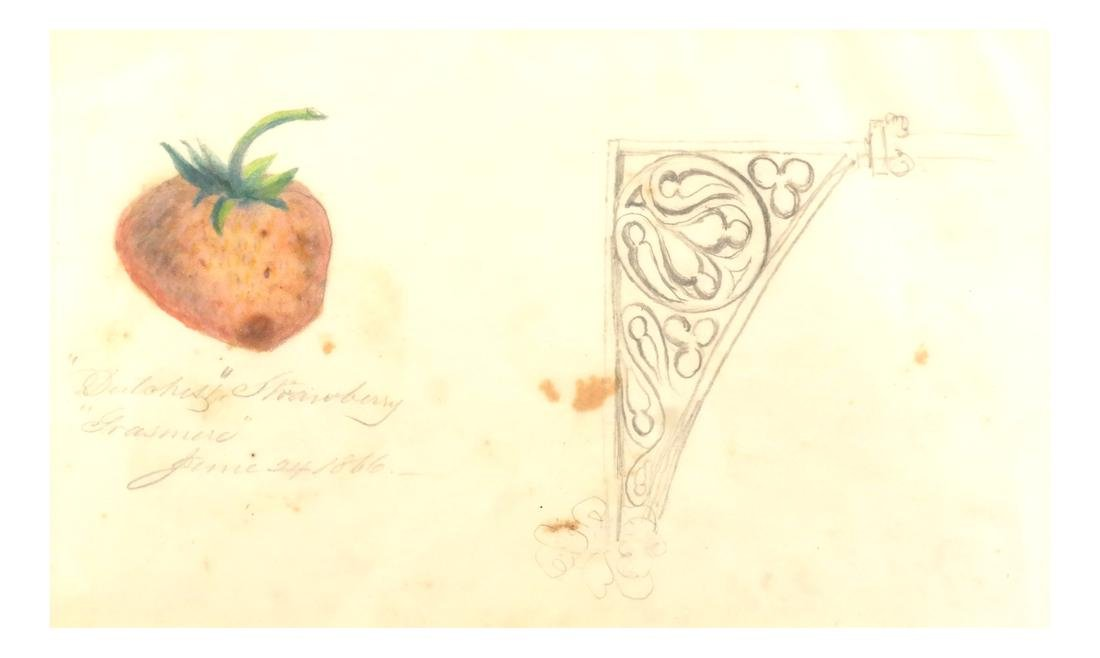 William Trenton Bogs, Strawberry - Watercolor on Paper