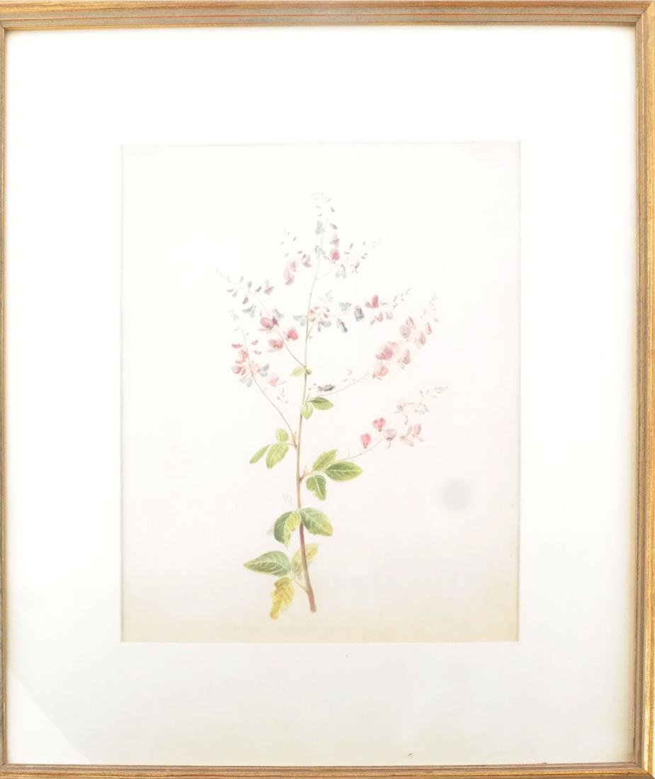 Edwin Whitefield, Horticultural Watercolor - 2