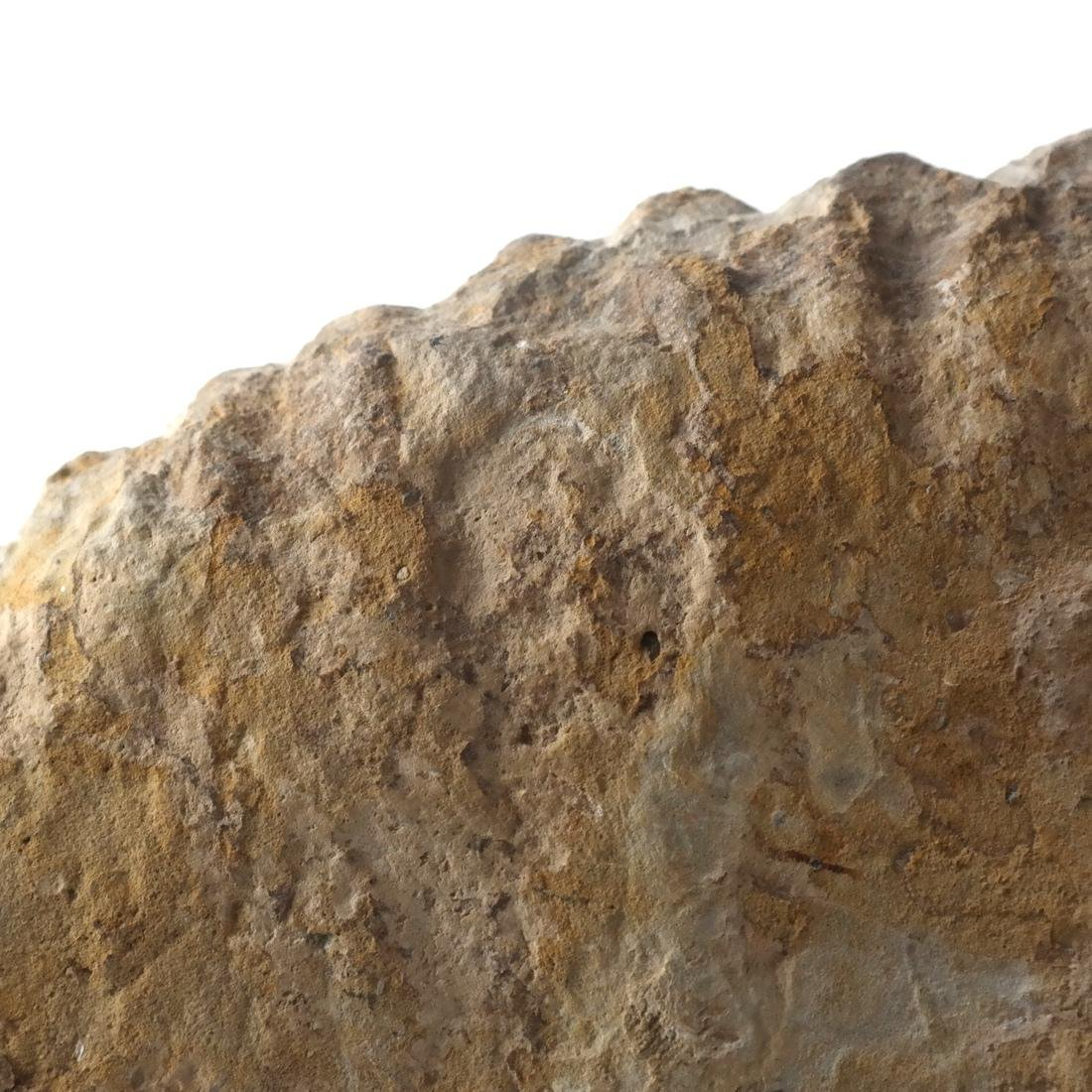 Fossilized Ammonite Specimen - 6