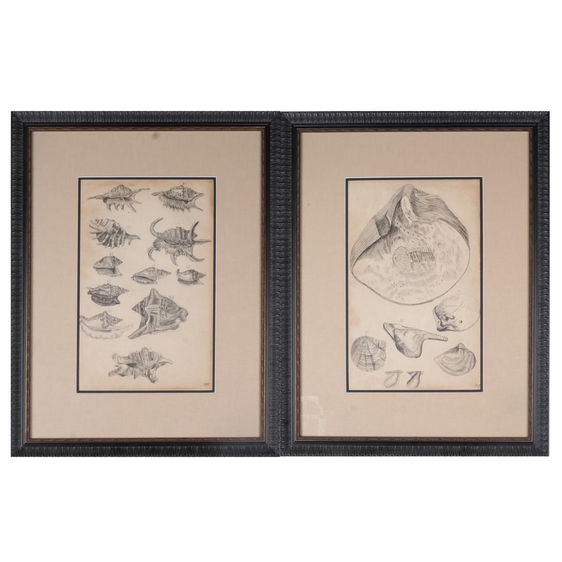 Two Shell Life Framed Prints Italian 18th Century