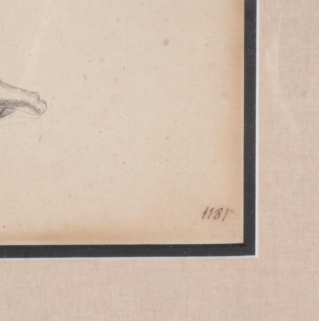 Two Shell Life Framed Prints Italian 18th Century - 3