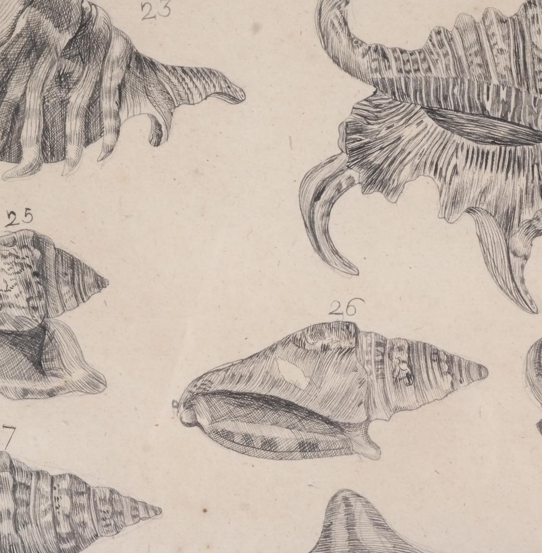 Two Shell Life Framed Prints Italian 18th Century - 4