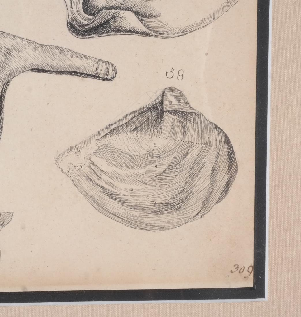 Two Shell Life Framed Prints Italian 18th Century - 8