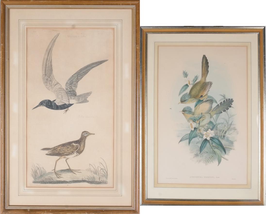 Two Aviary Engravings Dedicated to Geo III