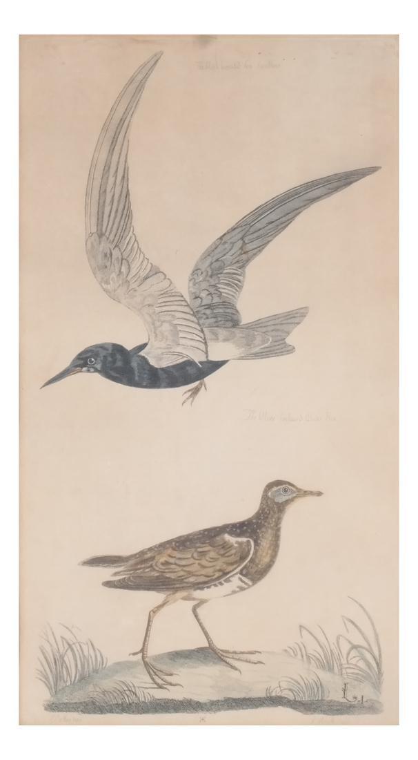 Two Aviary Engravings Dedicated to Geo III - 2