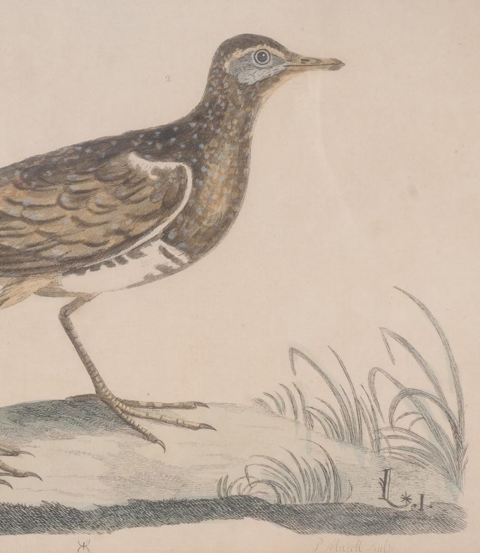 Two Aviary Engravings Dedicated to Geo III - 3