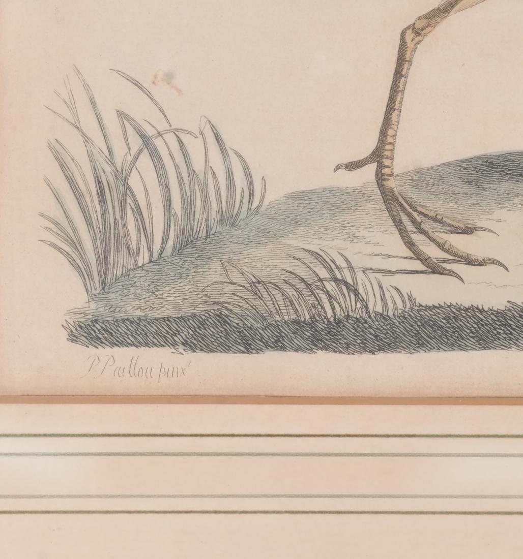 Two Aviary Engravings Dedicated to Geo III - 5