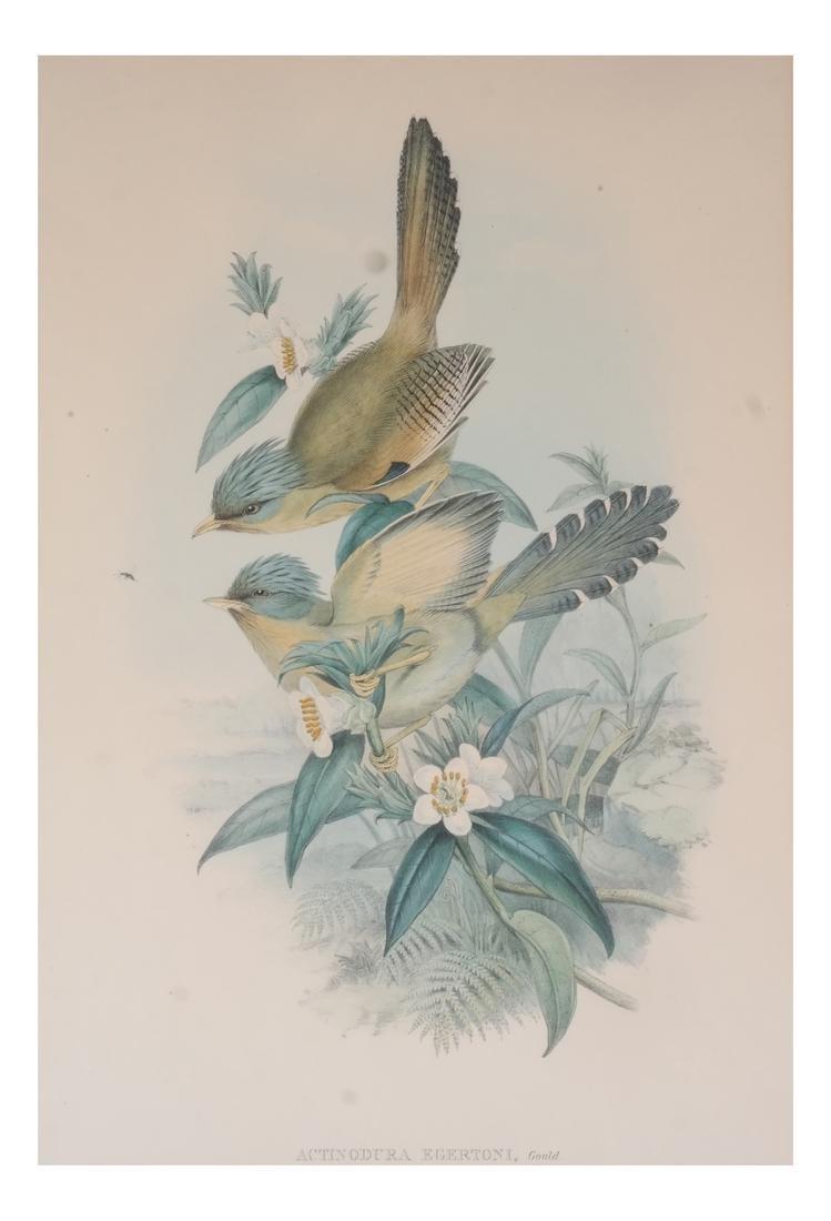 Two Aviary Engravings Dedicated to Geo III - 9