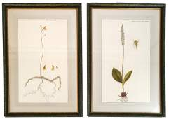 Two French Horticultural Prints