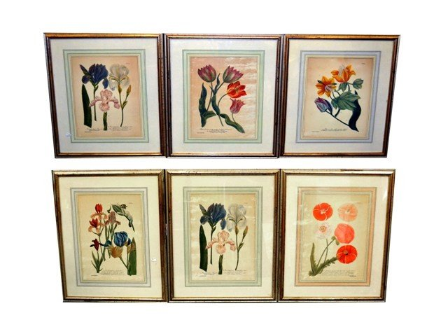 10: Group of Six Reproduced 18th C.  Botanical Prints