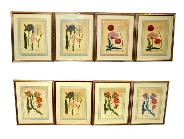 11: Group of Eight Reproduced 18th C. Botanical Prints