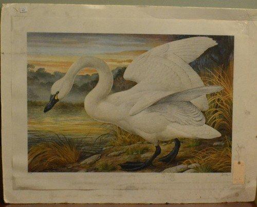 6: Collotype Print Swan