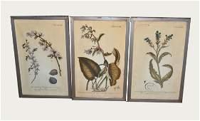 473 Six Early Botanical Prints