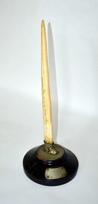 480: 19th Century Ivory Tusk