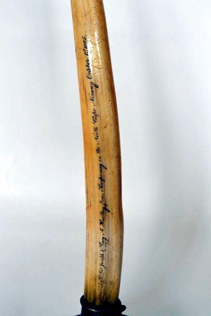 480: 19th Century Ivory Tusk - 4