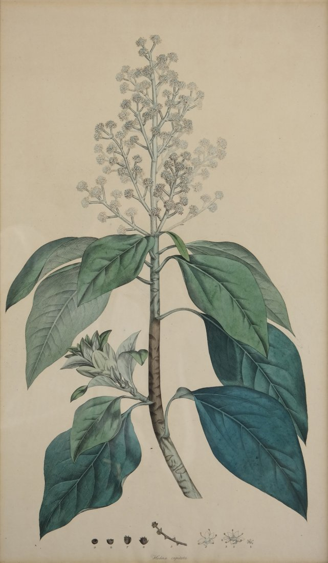 Three Antique Botanical Prints