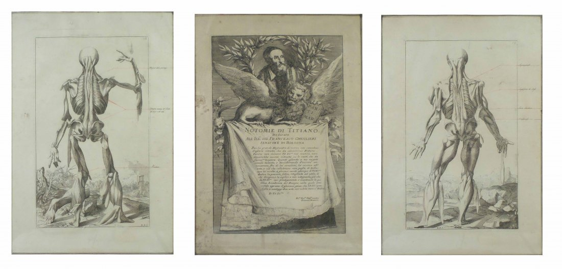 After Titian - Three Anatomical Engravings