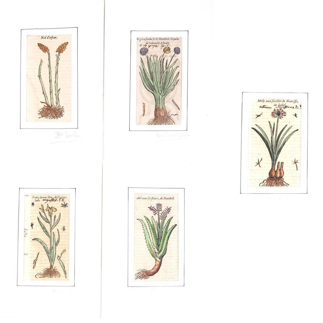 Five French Botanical Prints