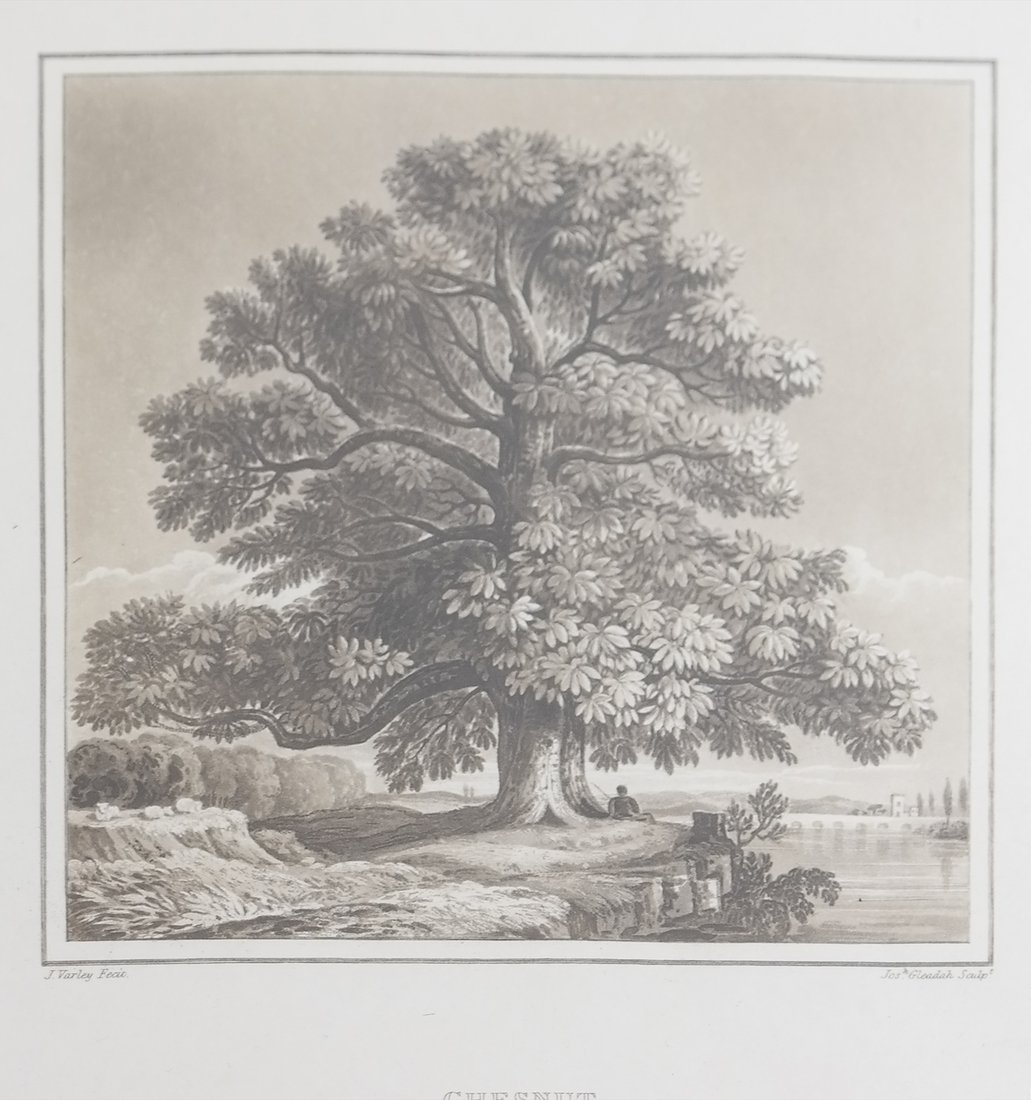 Two Antique Tree Lithographs - 2