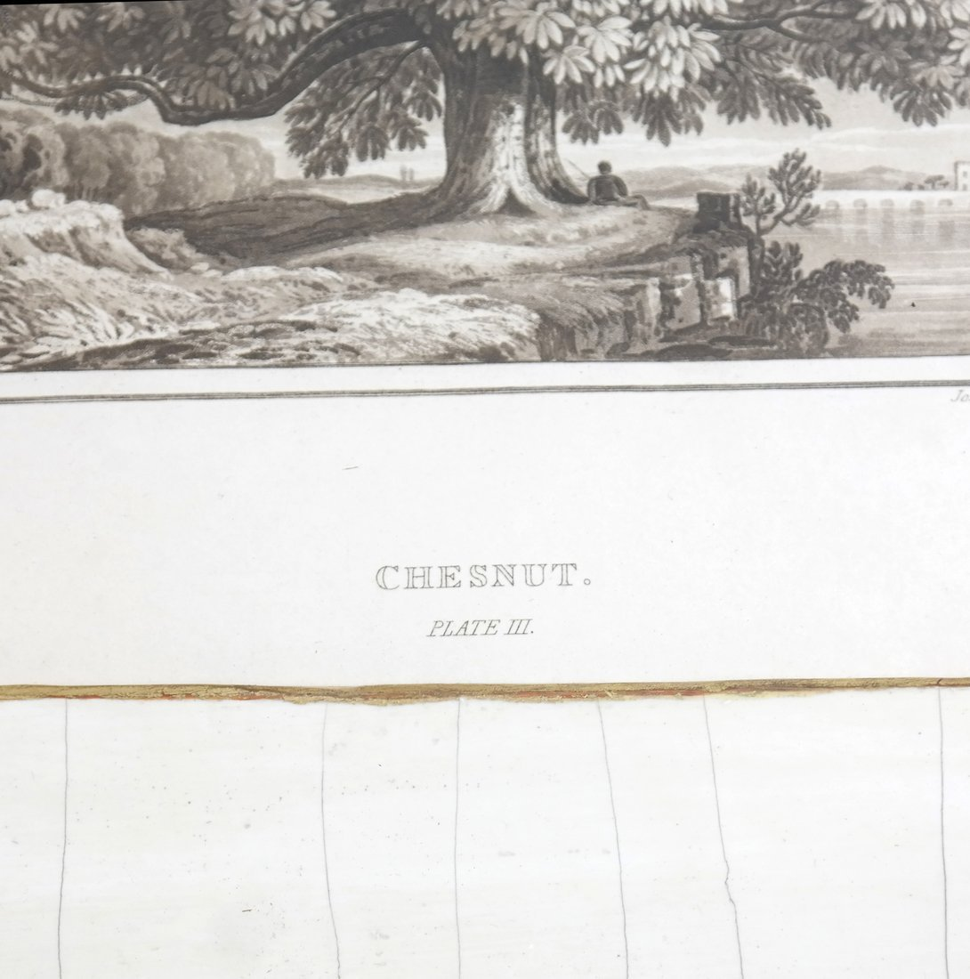 Two Antique Tree Lithographs - 5