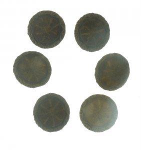 Six Colonial Brass Shank Buttons