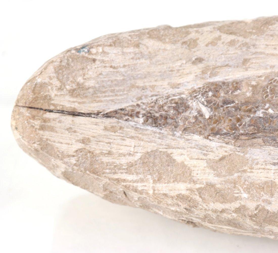 Antique Fossilized Fish - 4