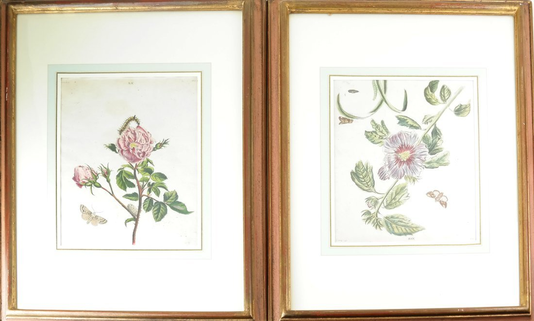 Two Hand-Colored Floral Engravings