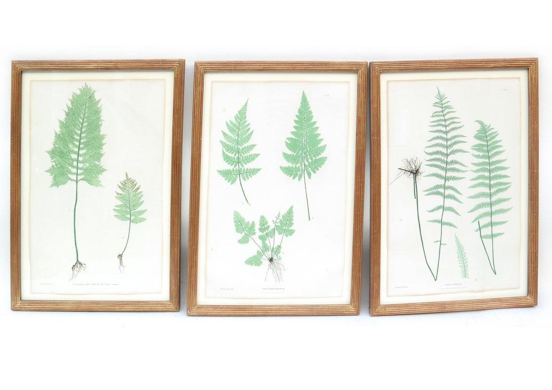 Three Horticultural Prints