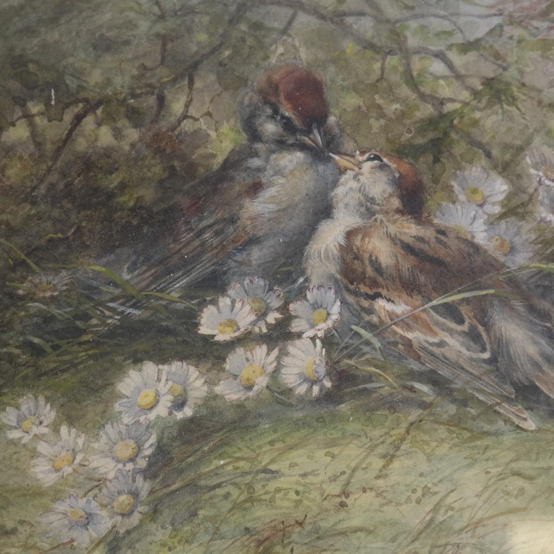 Hector Giacomelli, Birds, Watercolor - 3