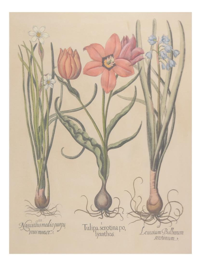 Print of Three Plants