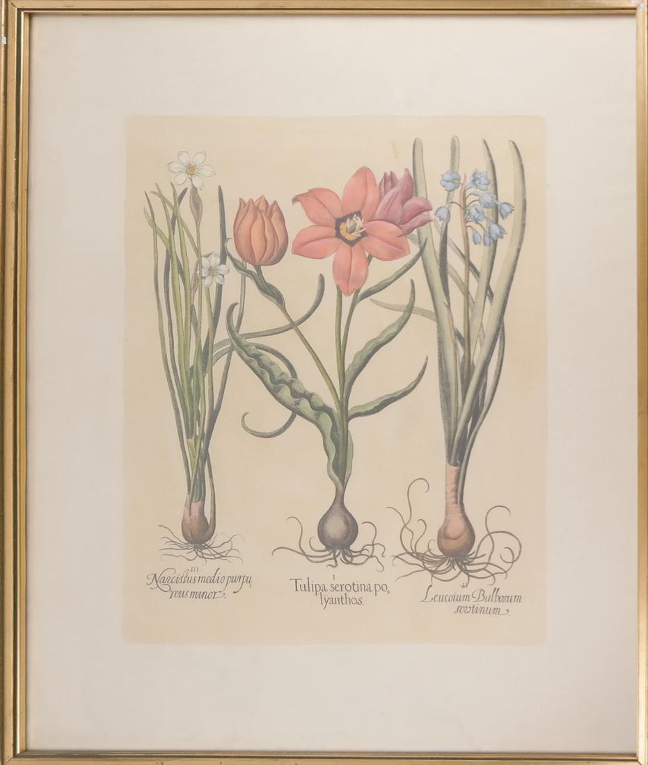 Print of Three Plants - 2