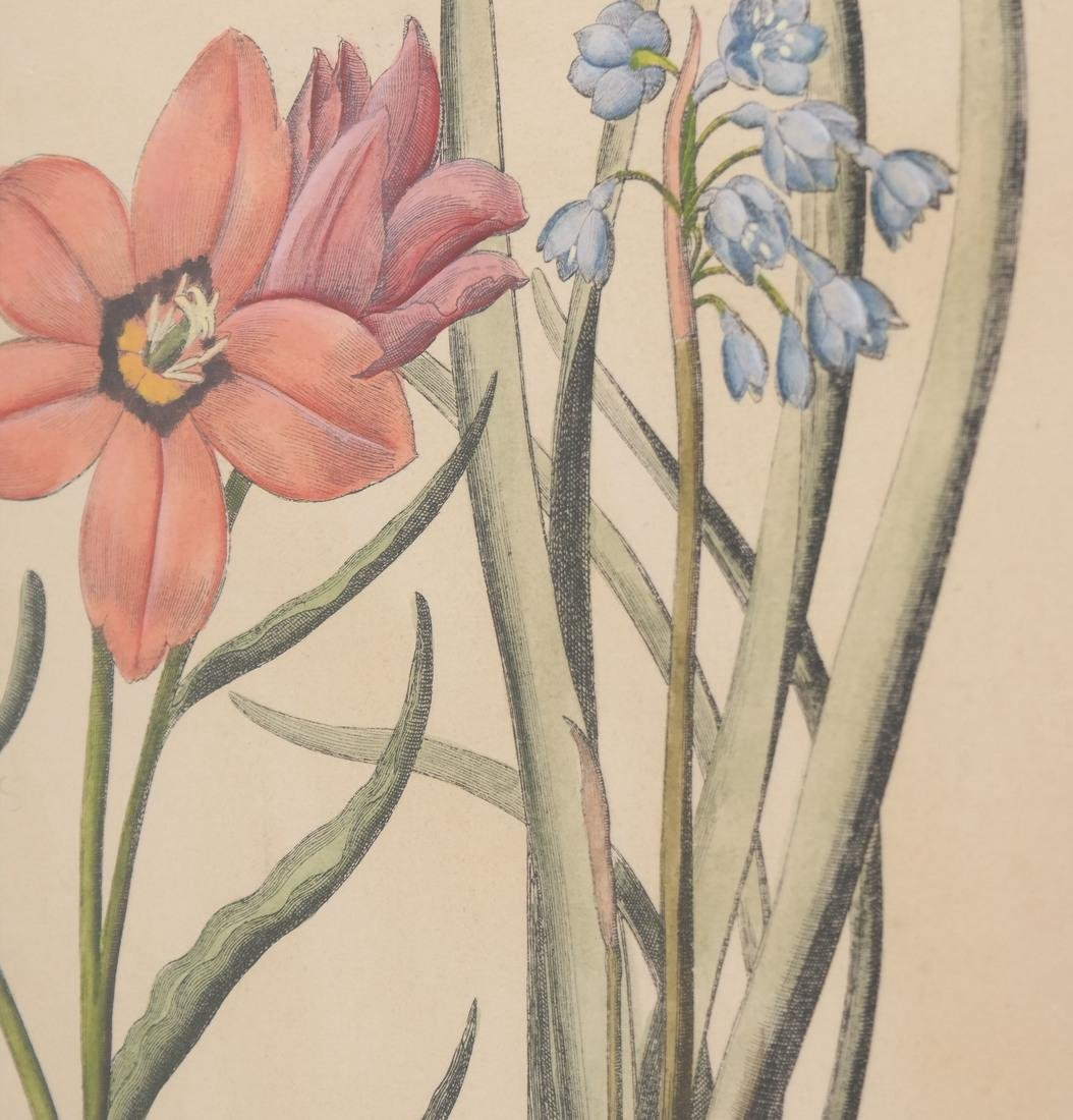 Print of Three Plants - 3