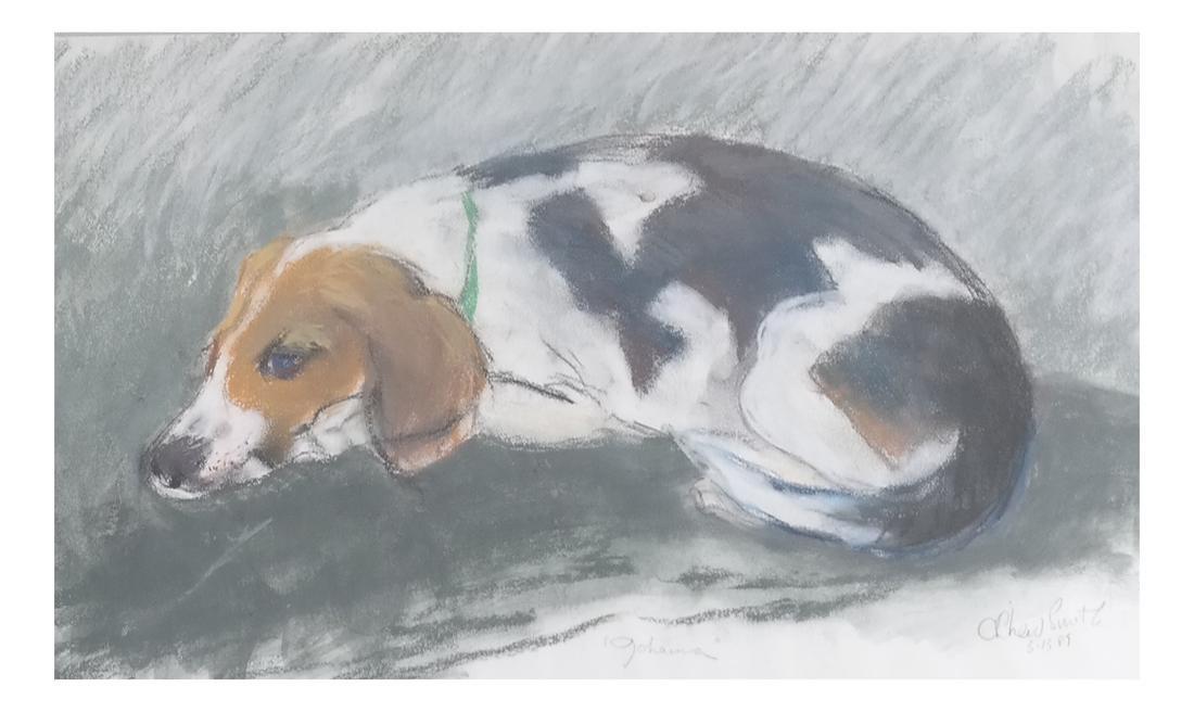 Resting Dog, Gouache