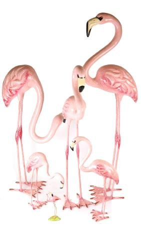Six Mexican Pink Flamingos