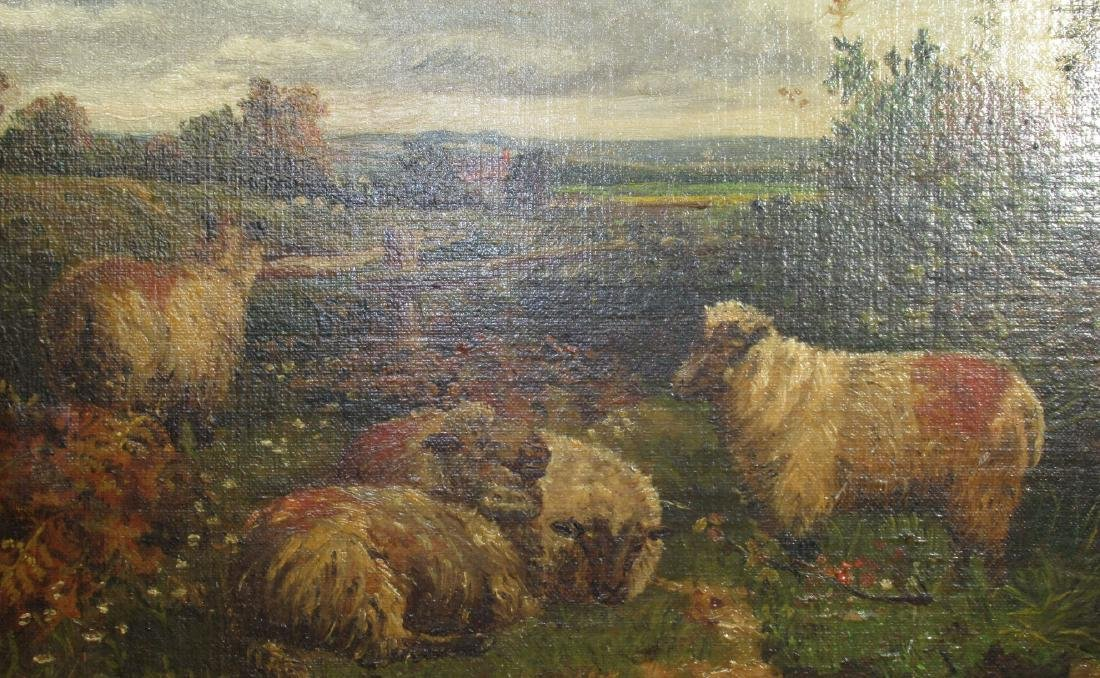 O/B of Sheep in Pasture - 2