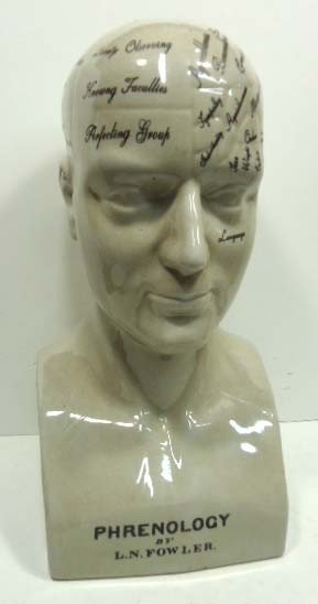 146: Lg. Phrenology Head